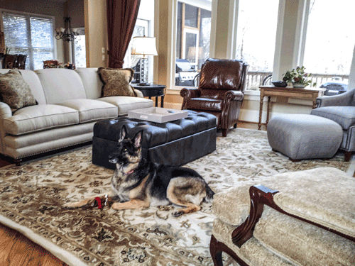 AHT designs pet-friendly interiors