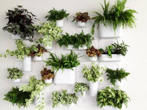 Freshen up your interior with live greenery