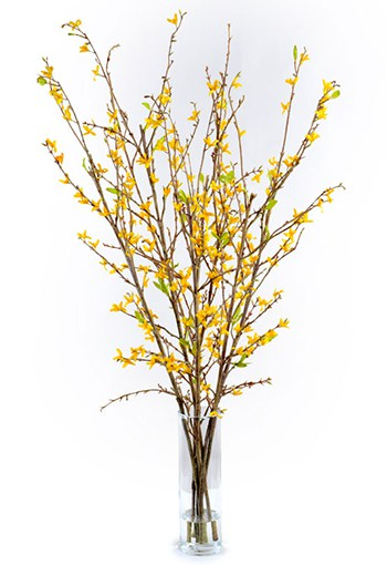 New Growth Designs Forsythia